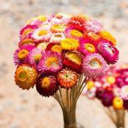 Trà Hoa Bất Tử Siêu Thị Thiên Nhiên