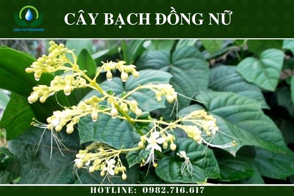 bach-dong-nu-say-kho-2