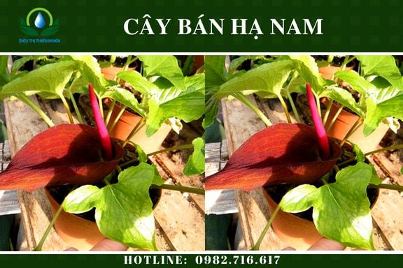 ban-ha-nam-say-kho-2