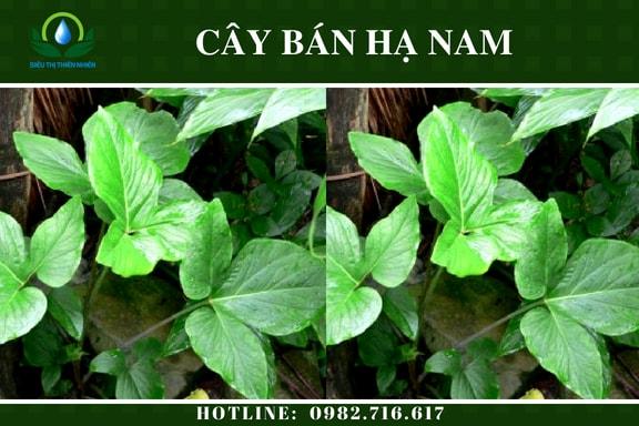 ban-ha-nam-say-kho