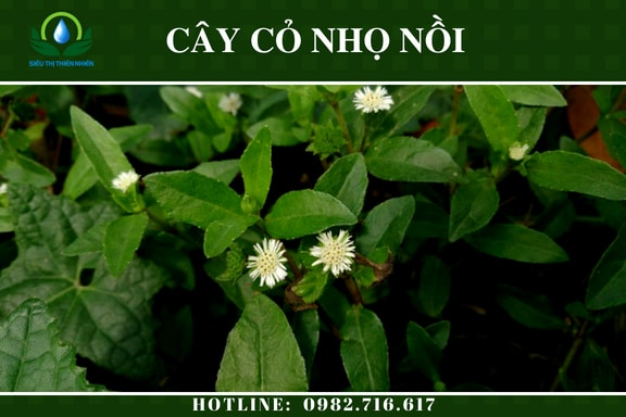 co-nho-noi-say-kho