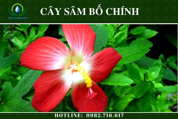sam-bo-chinh-say-kho-2