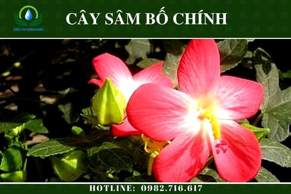 sam-bo-chinh-say-kho